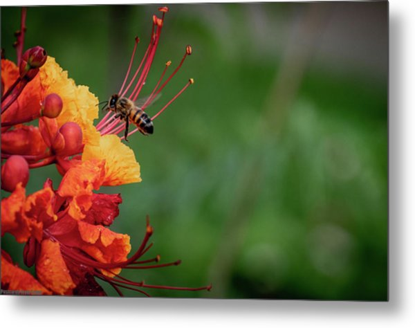 Honey Bee Extraction Metal Print