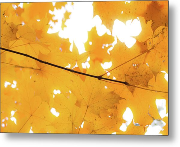 Honey Colored Happiness Metal Print