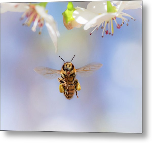 Honeybee Suspended On Air Metal Print