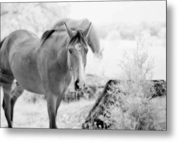 Horse In Infrared Metal Print