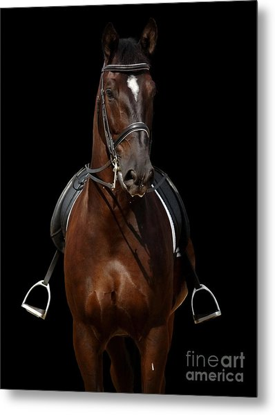 Horse Isolated On Black Metal Print