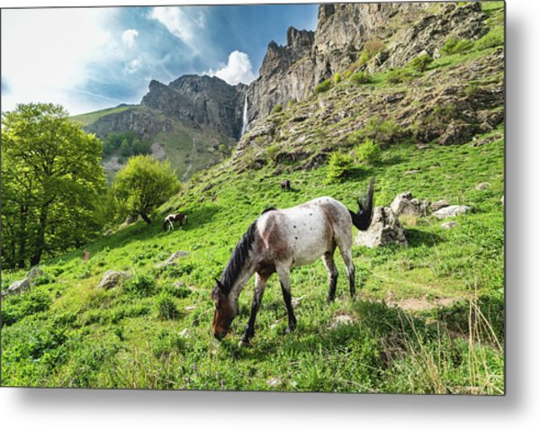 Horse On Balkan Mountain Metal Print