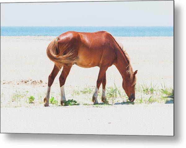 Horse On Beach Metal Print