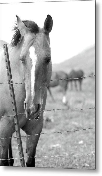 Horse Pasture  Metal Print by Dana Klein