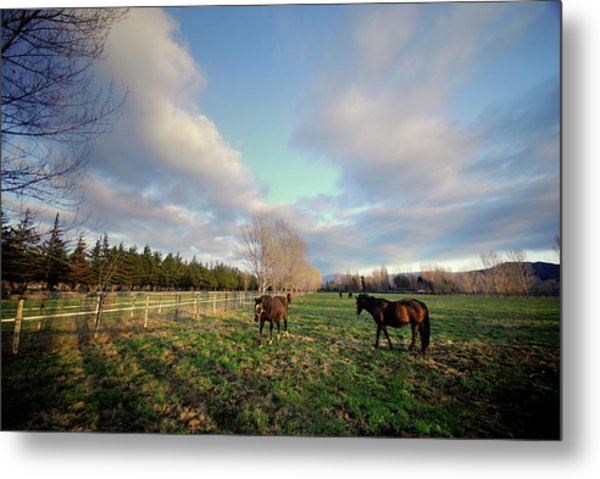 Horse Ranch Metal Print
