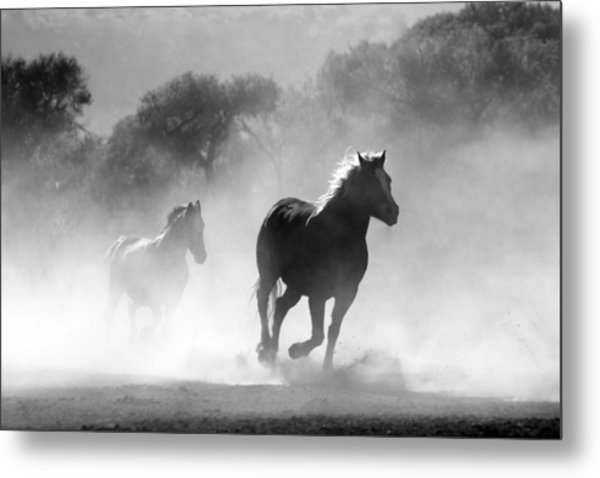 Horses On The Run Metal Print