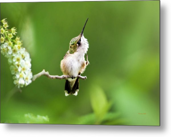 Hummingbird Flexibility Metal Print