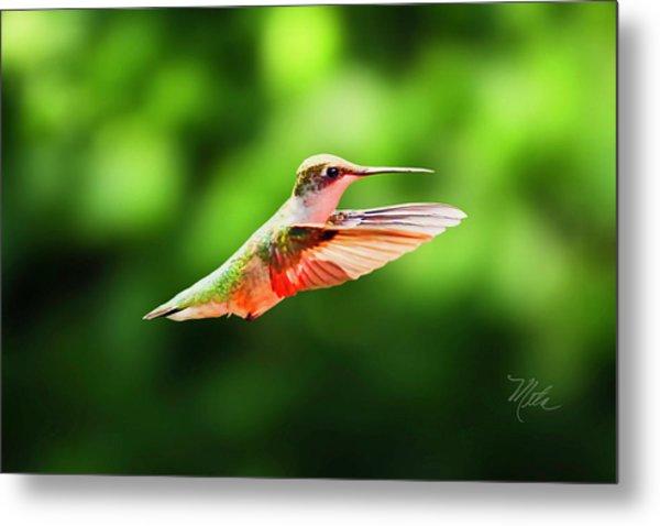 Hummingbird Flying Metal Print