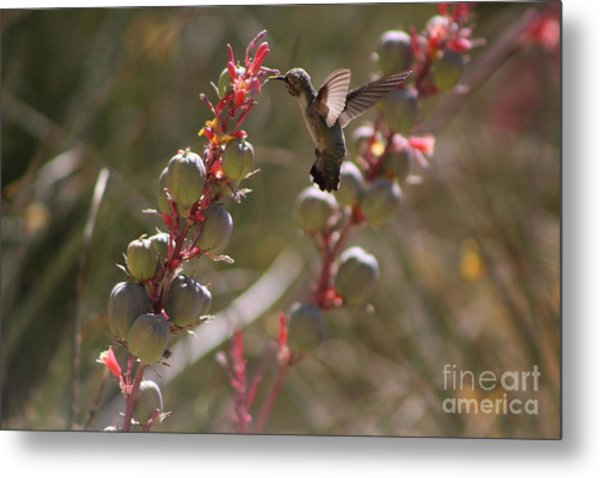 Hummingbird Flying To Red Yucca 3 In 3 Metal Print