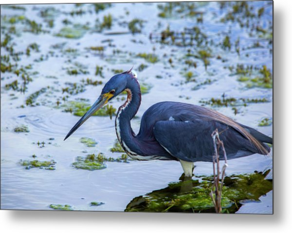 Hunt For Lunch Metal Print