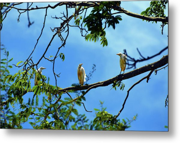 Ibis Perch Metal Print