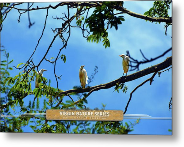 Ibis Perch - Virgin Nature Series Metal Print