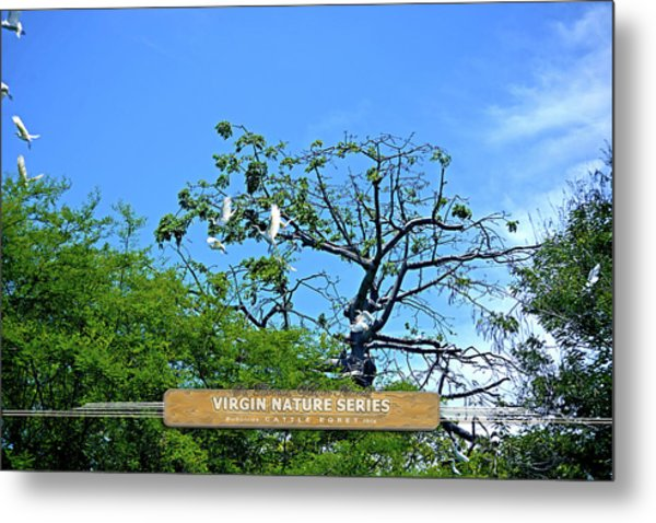 Ibis Risen - Virgin Nature Series Metal Print