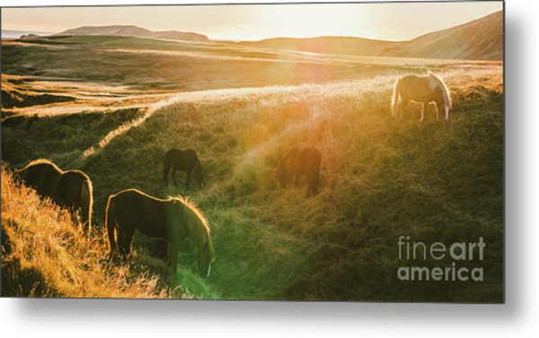 Icelandic Landscapes, Sunset In A Meadow With Horses Grazing  Ba Metal Print