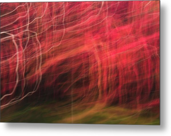 In Depth Of A Forest Metal Print
