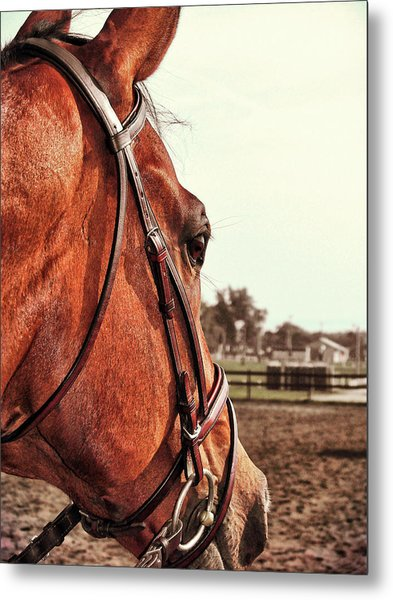 In French Chevel Metal Print