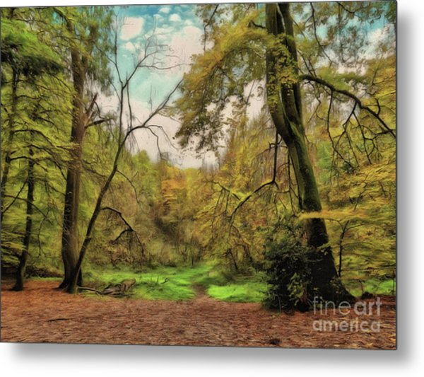 Metal Print featuring the photograph In The Woods by Leigh Kemp