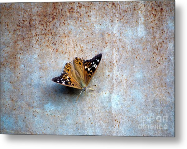 Industrious Butterfly Metal Print