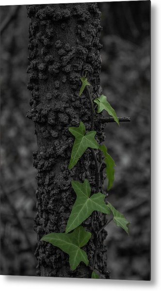 Industrious Ivy Metal Print