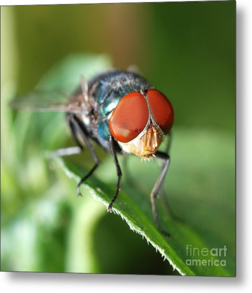 Insect Fly Macro On Leaf Metal Print