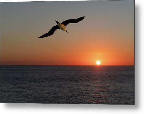 Metal Print featuring the photograph Into The Setting Sun by William Dickman