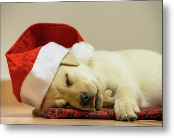 Is There A Santa For Dogs Metal Print by Stefan Cioata
