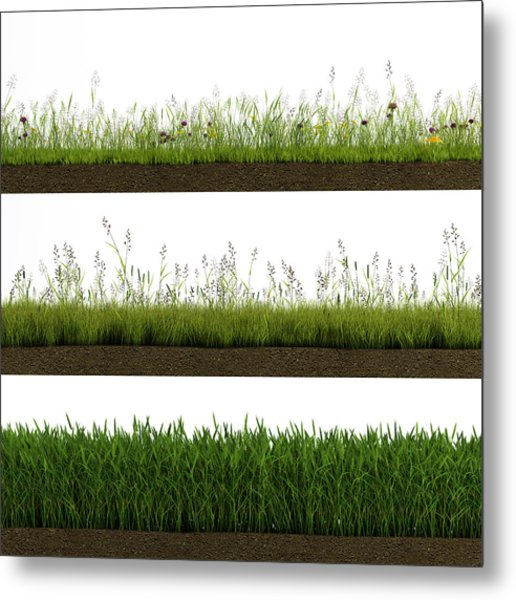 Isolated Grass Metal Print by Ivanwupi
