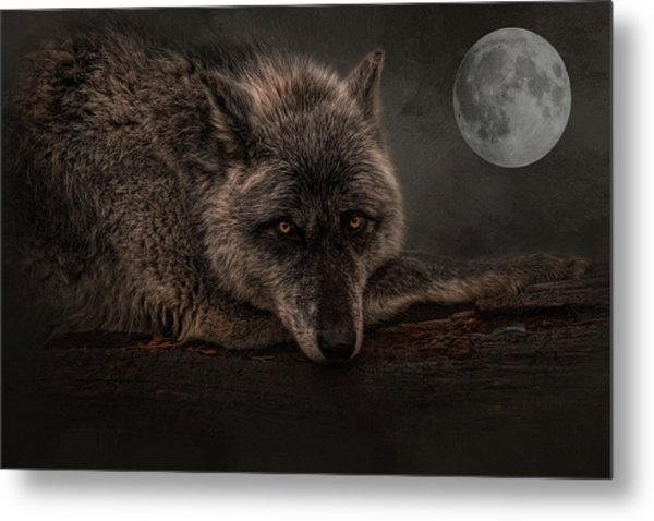 Its A Lonely Night  Metal Print