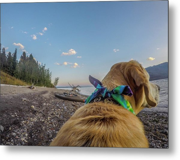 Metal Print featuring the photograph Jackson Lake By Photo Dog Jackson by Matthew Irvin