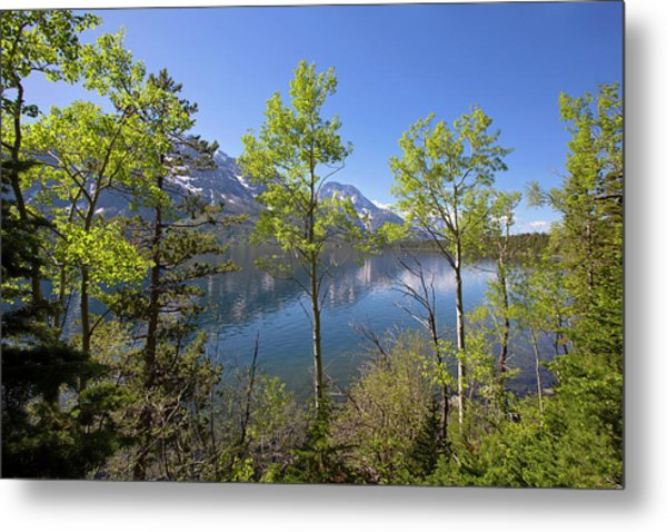 Metal Print featuring the photograph Jackson Lake by Sue Collura