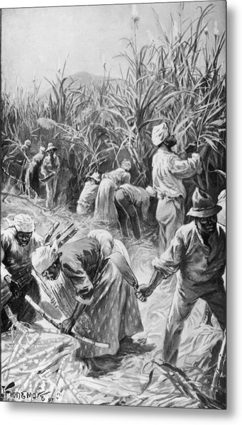 Jamaican Cane Cutters Metal Print by Hulton Archive