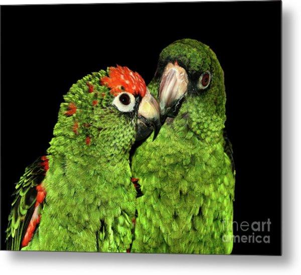 Metal Print featuring the photograph Jardine's Parrots by Debbie Stahre