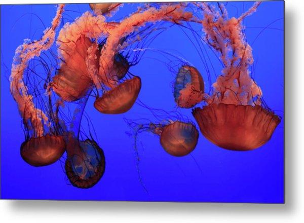 Jellyfish Metal Print by Ionut Iordache