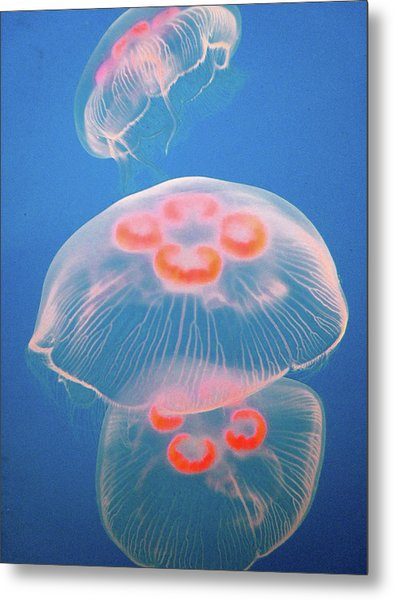 Jellyfish On Blue Metal Print