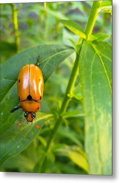 June Bug Metal Print