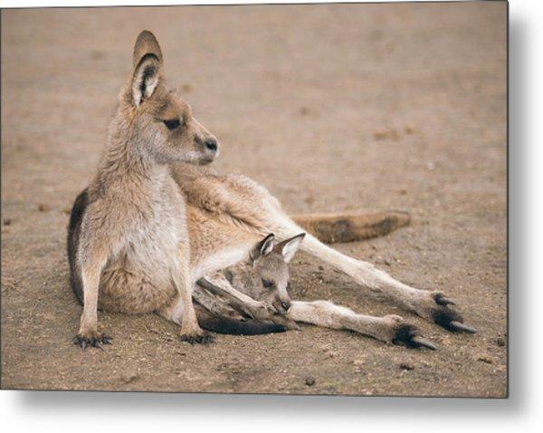 Kangaroo Outside Metal Print