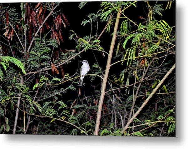 Kingbird At Night Metal Print