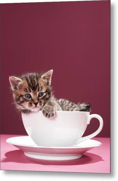 Kitten In Cup And Saucer Metal Print