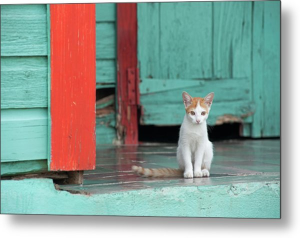 Kitten Sitting On The Porch Of A Metal Print