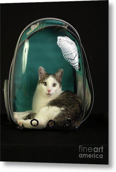 Kitty In A Bubble Metal Print