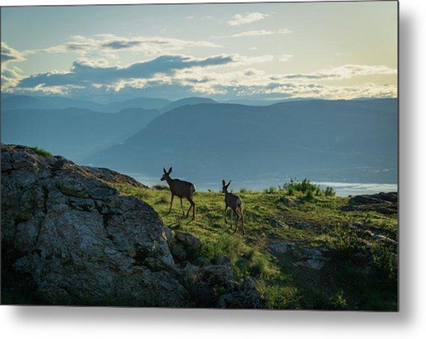 Kuipers Peak Deer Metal Print
