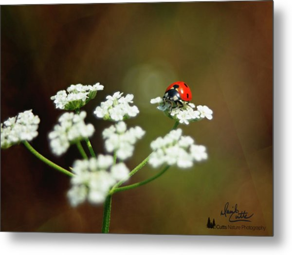 Ladybug In White Metal Print