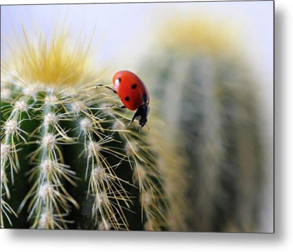 Ladybug On Cactus Metal Print