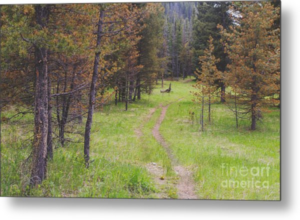 Landscape Image Of Hiking Trail In The Metal Print