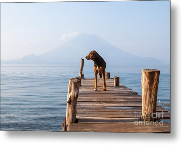 Landscape With A Dog On A Pier By The Metal Print