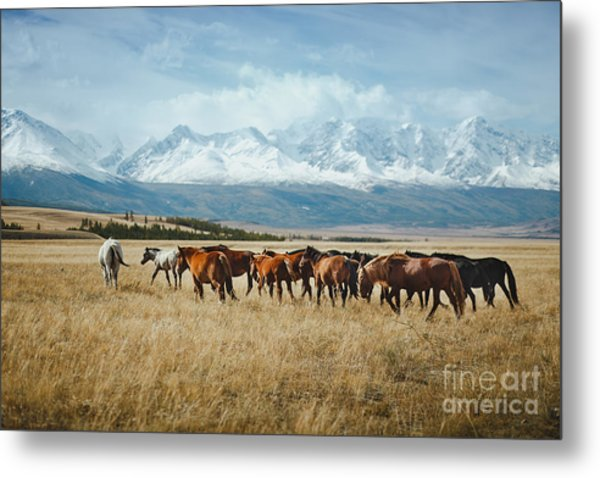 Landscape With Wild Horses Near The Metal Print
