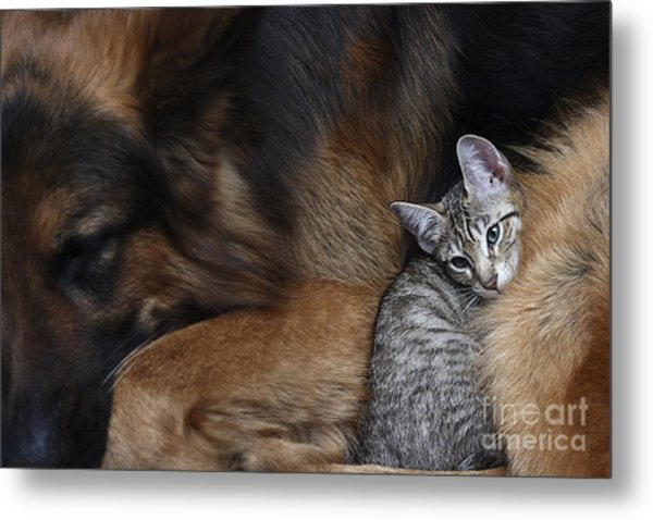 Large Dog And A Cat Metal Print
