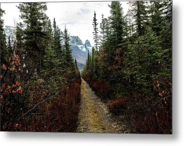 Metal Print featuring the photograph Late Fall by Fred Denner