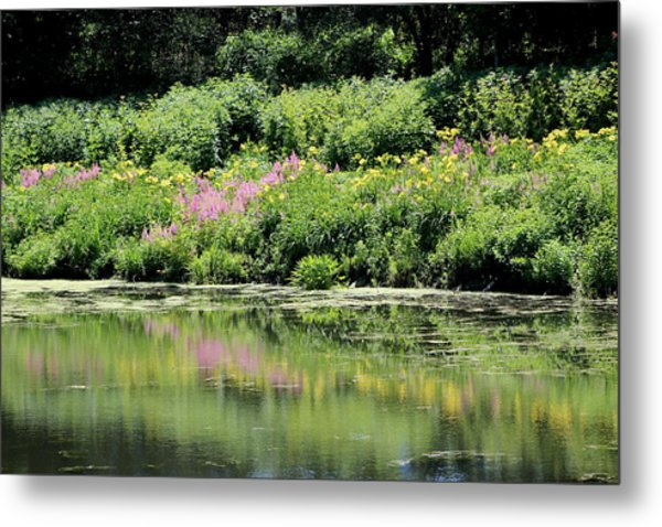 Lavender And Gold Reflections At Chicago Botanical Gardens Metal Print