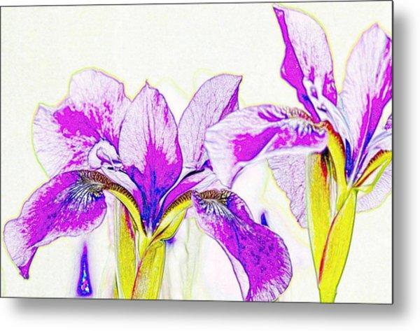 Lavender Irises Metal Print